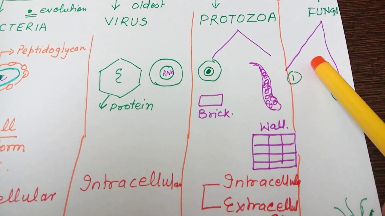 Ch 4easy bacteria viruses protozoa fungiin hindi youtube ch 4easy bacteria viruses protozoa fungiin hindi ccuart Choice Image