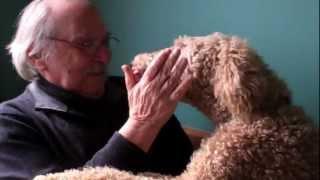 Poodle Attacks Old Man