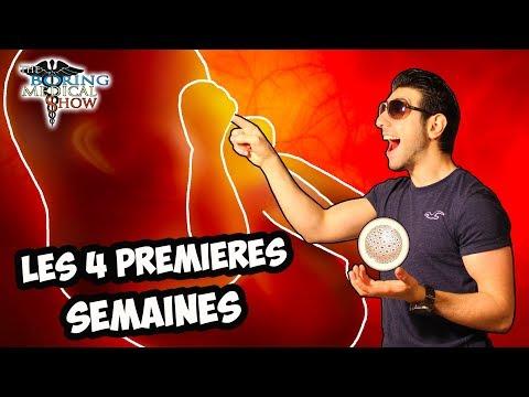 EMBRYOLOGIE : LES 4 PREMIÈRES SEMAINES - BMShow