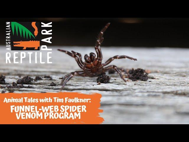 ANIMAL TALES WITH TIM FAULKNER | EPISODE 36 | FUNNEL-WEB SPIDER VENOM PROGRAM