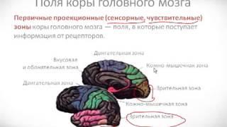 видео Мозг и психика