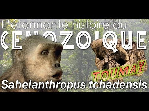 Sahelanthropus tchadensis dit Toumaï - Paléontologie - Simplex paléo