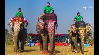 Download Video Elephant Festival , Sauraha, Chitwan, Nepal MP3 3GP MP4