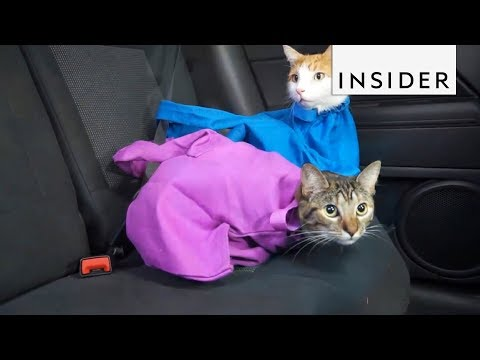 Carry Your Cat in a Bag