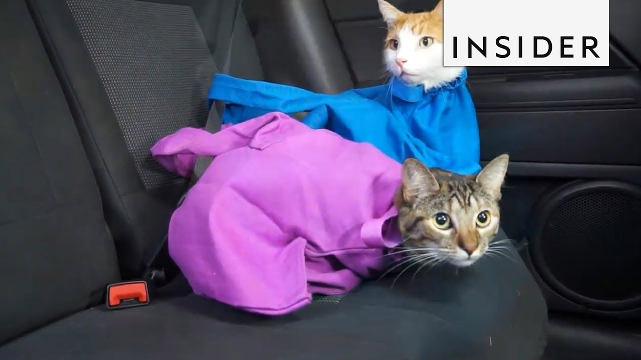 99cab88821 Carry Your Cat in a Bag - YouTube