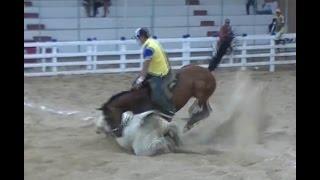 Cavalo De Esteira Testado