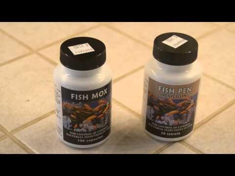 Fish Mox And Fish Pen (Fish Antibiotics)