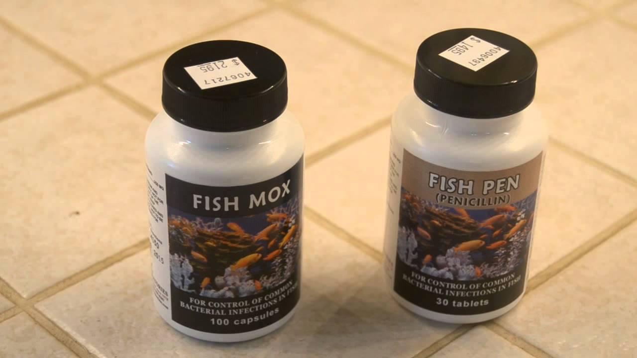 Fish mox and fish pen fish antibiotics youtube for Where can i buy fish mox