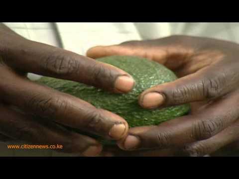 Smart Farm: Avocado Farming