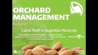 Australian Almonds - Orchard Management - Carob Moth