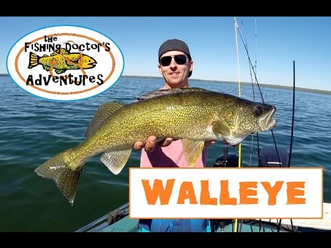 How To Fishing For Spring Post Spawn Walleye