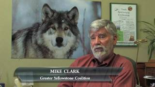 Gray Wolf Documentary Film