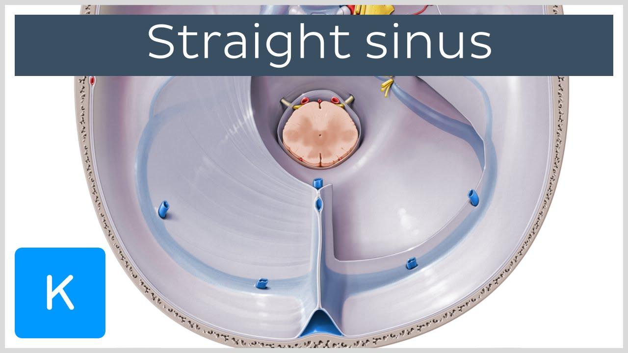 Straight Sinus (sinus rectus, tentorial sinus) - Human Anatomy ...