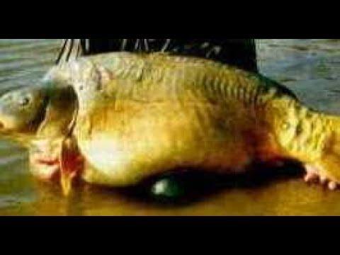Что Можно Поймать в Чернобыльском Ручье ?! Подводная Охота в Мороз  -20