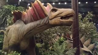 Dinozorların yaşam alanını gezdik.(Ankapark , Wonderland) #dinozor #t-rex
