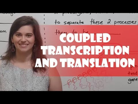 Coupled Transcription and Translation