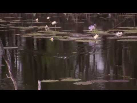 Fishing for Saratoga on Surface Frogs - Reel Action TV
