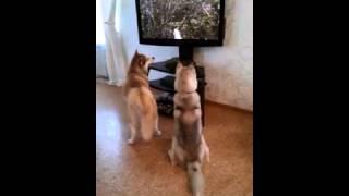 Собаки смотрят фильм про кошек