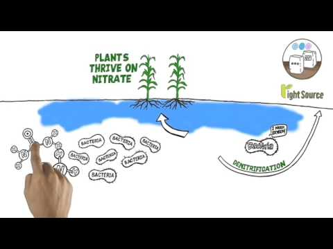 The Role of 4R Nutrient Stewardship in Reducing Greenhouse Gas Emission
