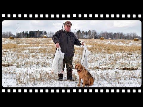 Охота на зайца с гончей и куча советов от опытного охотника.