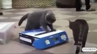 Самые милые и самые вредные коты )