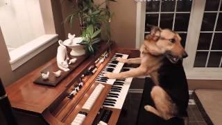 ¡perra Rescatada Enciende El Piano Y Lo Toca!