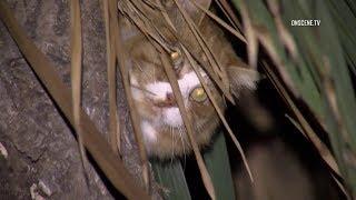 Firefighters Rescue Cat Stuck In Tree In Oxnard