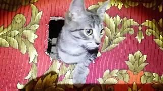 Прятки.Тайное место для кошек. Hide-and-seek. A secret place for cats.