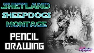 Watch me draw: DOG MONTAGE(Shetland Sheepdog) Photorealistic Drawing