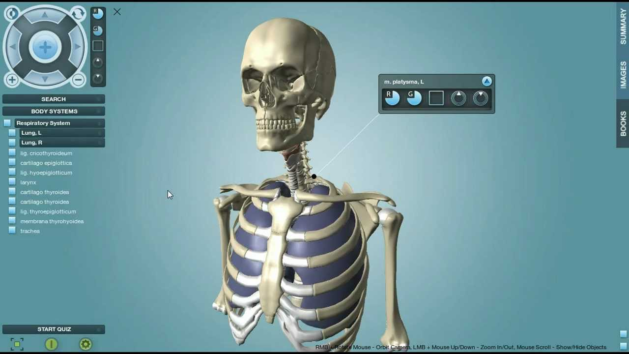 Anatronica 3d Anatomy Pro For Windows And Mac Youtube