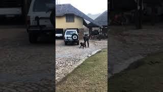 K9 EXCELLENCE dog training Eddie Coetzee