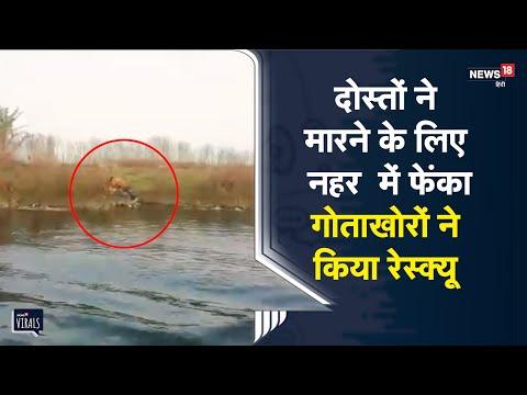 Kota   दोस्तों ने मारने के लिए नहर में फेंका, गोताखोरों ने किया रेस्क्यू    Viral Video