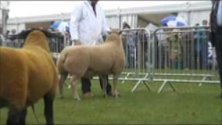 Royal Highland Show 2009: Sheep inter-breed championship