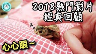 2018????熱門影片經典回顧❤|Cute Turtle Moments Compilation|【小龜成長日記】