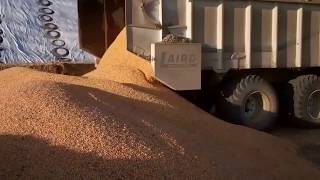 High Moisture Corn Central Valley California - Diamond J Farms, Inc