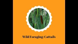 The Changing Earth Presents: Wild Foraging Cattails