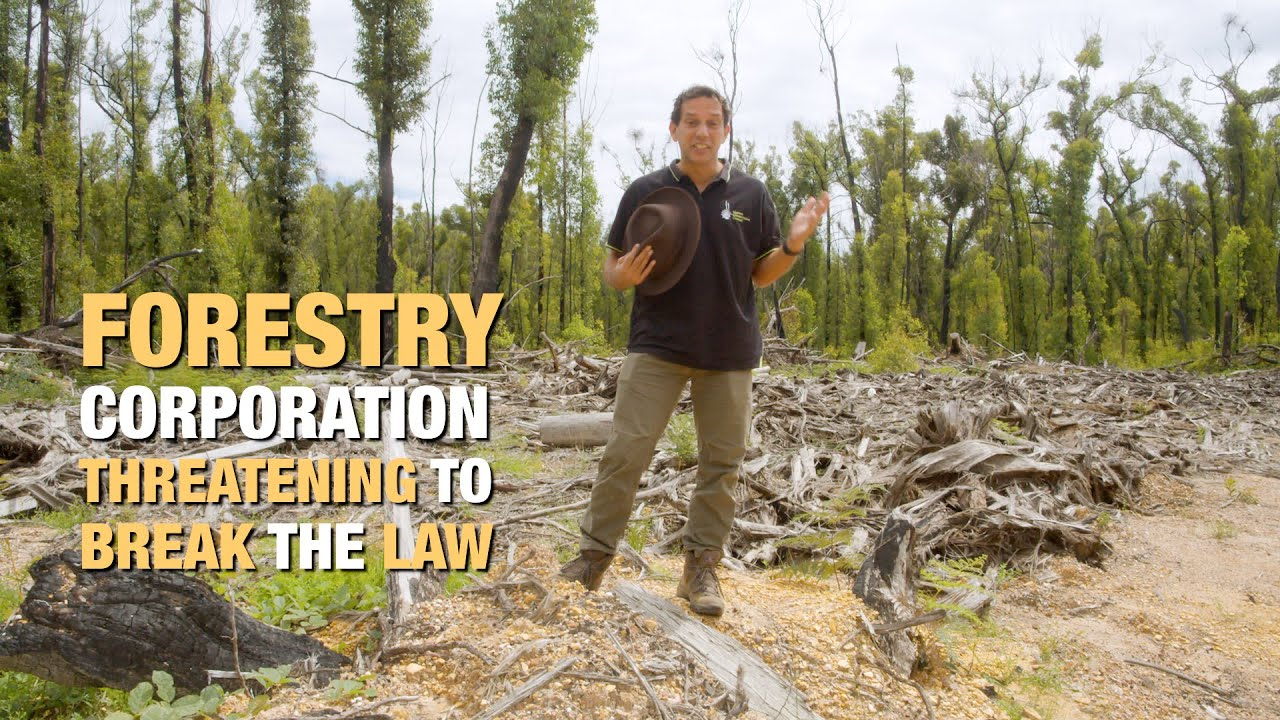 Andrew Constance: Stop logging the fire-ravaged South Coast