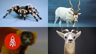 These 8 Unique Creatures Are As Rare As They Are Fascinating