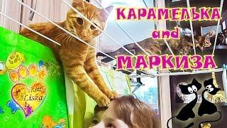 №16 СМеШныЕ КОТЯТА!!! МаРкиЗА и КарАМеЛьКА ВЕСЕЛЯТСЯ:))) ПРИКОЛЫ!!!