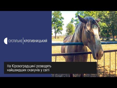 Суспільне Кропивницький: На Кіровоградщині розводять найшвидших скакунів у світі