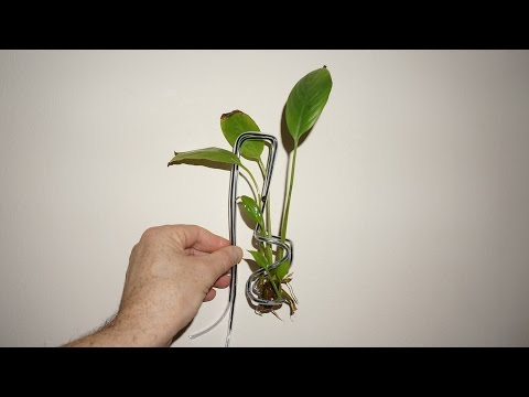 Aquarium Plant Holder Of Wire Hanger