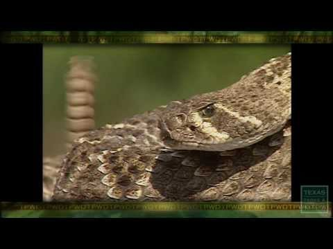 PBS December 1-7, 2013, #2207 - Texas Parks and Wildlife [Official]