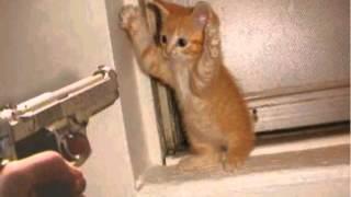 ПП - Убил кота