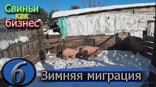 видео: ПОДГОТАВЛИВАЕМ КЛЕТКИ К ОПОРОСУ