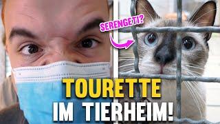 Tourette im Tierheim - Auf der SUCHE nach SERENGETI!