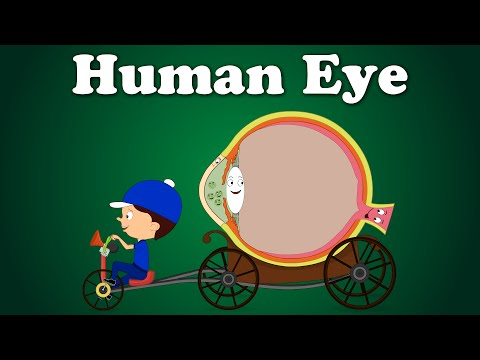 Human Eye | #aumsum #kids #education #science #learn