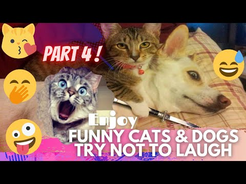 🤣 It's TIME for SUPER LAUGH! 🤣FUNNY CATS & DOGS🙀🐶BEST FUNNY MOMENTS PART 4 🤪   TRY NOT TO LAUGH 🤭