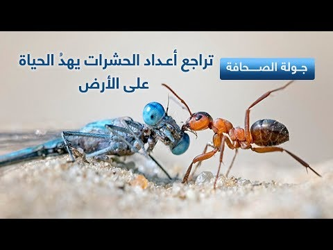 22-10-2017 | تراجع أعداد #الحشرات يهدد #الحياة على #الأرض .. وعناوين أخرى في جولة الصحافة  - نشر قبل 5 ساعة