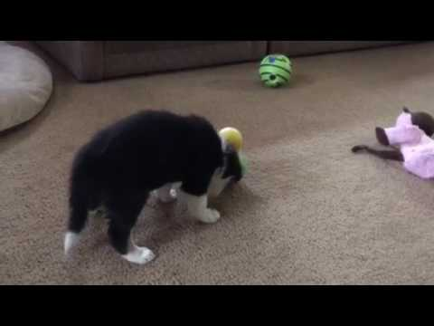 Credit male finding the food toy