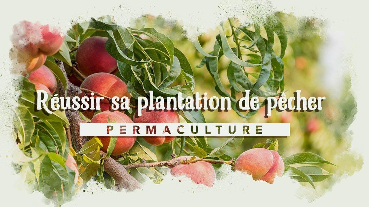Planter un PÊCHER dans son jardin ...🍑🍑🍑 - YouTube